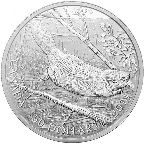 2014 5 oz Swimming Beaver $50 Canadian Silver Coin