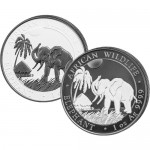 black-white-elephant-feat